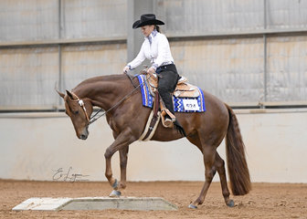 Shadowvalley Suthern Sun, ridden by Liz Keating in the Junior Horse Trail.