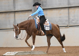 Triandibo Incede ridden by Liz Christian in the Amateur Senior Horse Trail