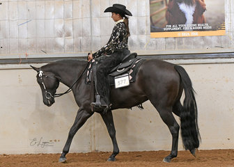 Triandibo Inshedynamic, ridden  by Emmanuelle Pages in the  3 Year Old Western Pleasure Class.