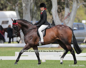 "Sarah Allsop's exhibit ""Montero"" in the Child's Hack, over 15hh. Rider under 17 years"