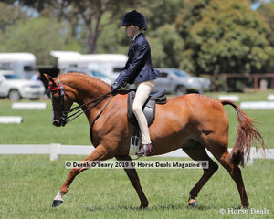 """""""Prince Harry of Ensenada"""" exhibited by Nicole Doupain placed Top Ten in the Child's Large Pony, over 12.2hh & n/e 14hh. Rider under 17 years"""