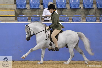 Scarlett Porter made Top Five in the class for Ridden Welsh A Mare, Gelding or Stallion riding Ash Poater's, 'Vanoca Park Lady-Smith (Llanfairbryn Goldrush/Nattai Dark Lady)