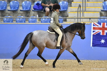 Warren Karuse's, 'Kylandee Carmen' (Derlwyn Zarek/Trentlyn Carisma) is pictured during the Section B Mare, Gelding, Stallion Championship.