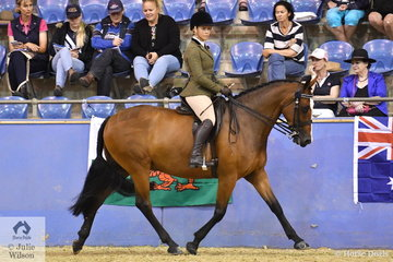 Annabelle Creed's, 'Brookside Dakota' (Dracmoore Firestorm/Torlea Duveta) is pictured during the Ridden Part Welsh Over 14.2hh Championship.