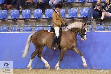 Gloria Murray's eye catching, 'Maeve Keeva Sweeet Music' (Cwmkaren James Express/Seawynd Sunshine) is pictured during the Ridden Welsh Section D Mare, Gelding, Stallion Championship.