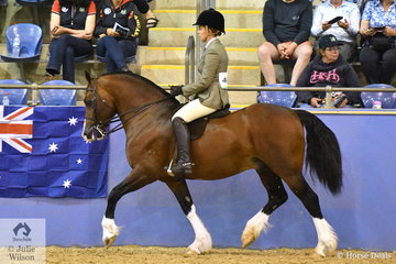All the way from WA, Lauren King's, 'Kings Town I'm A Prince' (Harrowclough Talisman imp UK/Fronarth Flasy Lady imp UK) was declared Champion Ridden Welsh Section D Mare, Gelding, Stallion.