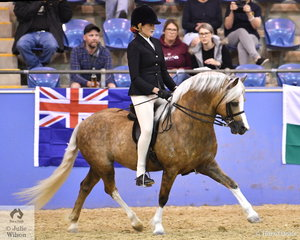 Emma Adams rode Dr Harry Cooper's, 'Arcadian Anzac Hero' (Osory Mr Sandman/Creswell Anastasia) to claim the Ridden Welsh Section A Mare, Gelding, Stallion Championship.