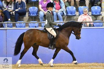 Michelle Styles, 'Nawarrah Park Poptastic' (Synod Aristocrat imp UK/Acheron Pytaten) was declared Runner Up Ridden Welsh Section C Mare, Gelding, Stallion.