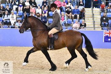 Taylah Lee's , 'Burrowa Challenger' was declared Runner Up Ridden Section D Mare, Gelding, Stallion.