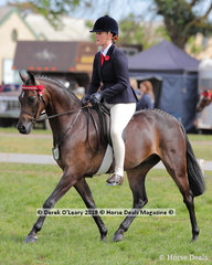"""Reserve Champion Debutante Saddle Pony, over 12.2hh & n/e 14hh, """"Royalwood Choir Master"""" ridden by Sheridan Hammet and exibited by Bobby Hammet"""