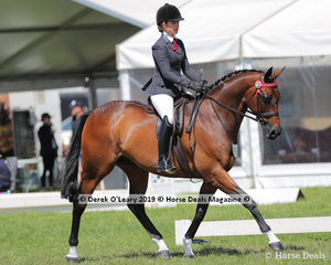 """""""The Guardian""""  exhibited and ridden by Kayla Gellin the Debutante Saddle Hack, over 15hh"""