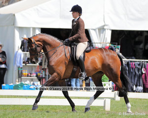 """Champion Debutante Show Hunter Hack, over 15hh, """"Bloomfield Valtini"""" ridden and exhibited by Brooke Elise Wheeler"""