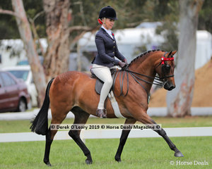 """""""Whitmere Airs and Graces"""" ridden by Izabella McIntyre.exhibited by Nicole Riemer in the Royal Occasion Pony  Exhibit n/e 14.2hh"""