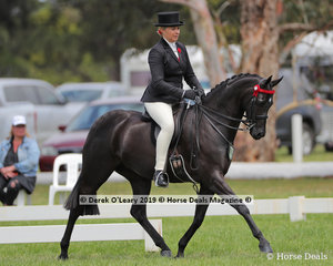 """""""Wideacre Black Diamond"""" ridden and exhibited by Lynda Hayesin the Royal Occasion Pony, Exhibit n/e 14.2hh"""