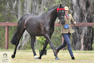 Reece Lawson did the honours with Simone Padoin's, 'Wynara Signature' (Copyright/Wynara Simply Irresistable) that was declared Champion Junior Part Welsh Exhibit.