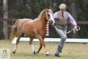Gary Le Brocq did the honours with Christina Taylor's, 'Nattai River Shining Light' (Nattai Calypso/N. Luminous) to win the claa for WMP Broodmare Eight Years and Over.