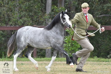 An always busy Daniel Harvey claimed the Junior Champion Welsh Mountain Pony award with his Yearling Filly, 'Eagle Park Venus' (Imperial Baledur/Imperial Veronika) and went on to take out the Reserve Champion Welsh Mountain Female award.