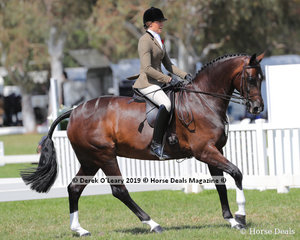 """Champion Small Show Hunter Hack, over 15hh & n/e 16hh, Abby Heffer riding """"AKS Rumor Has It"""""""