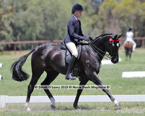 """""""Batavia"""" ridden by.Harrison Postill in the Small Hack, over 15hh & n/e 16hh"""