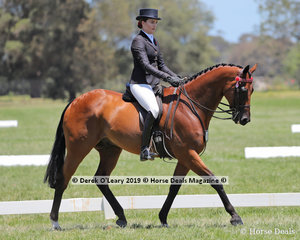 """""""Cynical""""ridden by Sarah McMasterSmall Hack, over 15hh & n/e 16hh, exhibited by Samantha McMaster"""