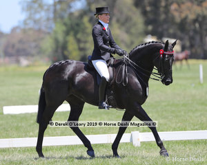 """""""Exotic"""" ridden and exhibited by Isabella Bould in the Small Hack, over 15hh & n/e 16hh"""