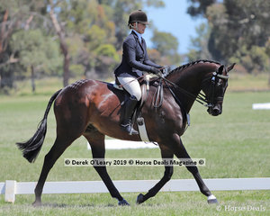 """Reserve Champion Large Hack, over 16hh, """"DP Amazing"""" ridden and exhibited by Michelle Paynter"""