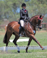 """""""High Fashion"""" ridden and exhibited by Syenna Vasilopoulos placed Top Ten in the Large Hack, over 16hh"""