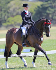 """""""Stan Boogie Man"""" ridden by Brynie Lee in the Large Hack, over 16hh, placed Top Ten"""