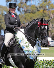"""Champion Large Hack, over 16hh, """"WBH Entourage"""" riden by Briony Randle and exhibited by Warren Coyle"""