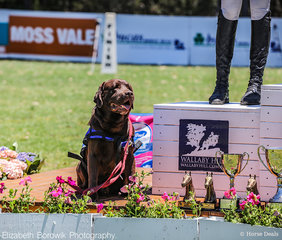 Bentley from Assistance Dogs Australia stole the show with his podium performance.