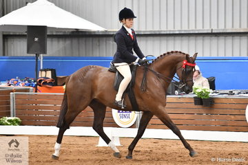 Representing Western Australia, Jenna Hall rode Rachel Langley's, 'Rosedale Country Fair' to claim the Child's Large Galloway Championship on day one of the 2019 Ego Sun Sense Australasian Show Horse and Rider Championships.