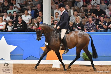 Representing NSW, Simon Deleeuw rode Leah Walsh's well performed, 'KP Royal Prince' to take out the Small Hack Runner Up award at the 2019 Ego Sunsense Australasian Show Horse and Rider Championships.