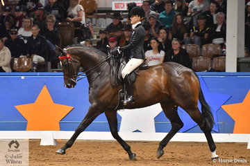 Riding for Victoria, Natalie McKay rode her, 'St Andrews' to take third place in the Large Hack Championship, the final event of the 2019 Ego Sunsence Australasian Show Horse and Rider Championships.