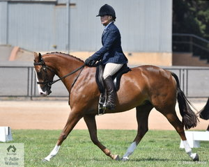 Long time and successful breeder and exhibitor, Libby Greshner rode her, 'Beauparc Magic Mike' to take out the First Season Show Hunter Galloway Reserve Championship.
