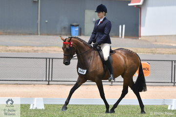 Kristy-Lee Wilson and Sue Thomas', 'Jadelee Xquisite' made Top Five in the First Season Hack Championship on day one of the 25th VAS Ltd Saddle Horse Championships.