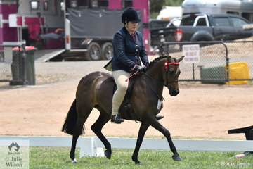 Crystal Cumming's, 'Mirinda Kurr' is pictured during the class for Rising Star Pony 12-12.2hh.