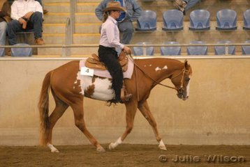 Competing in the final of the $750 Ltd 2 yo Western Pleasure Futurity sponsored by Croppy's P's and Q's, Love Me Tender owned by Belinda and Glen Geissler and ridden by Glen Geissler.