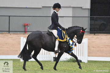 The Lee Family's, Tamrie Park Royal Estella took out the Large Pony Championship.