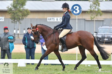 Rebecca Mackay's Style of Art was one of the large number of competitors in the Alabar Hero Series Standardbred State Final.