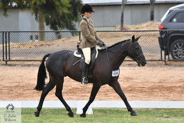 Glenys Grivell's, Village Man competed in the Alabar Hero Series Standardbred State Final.