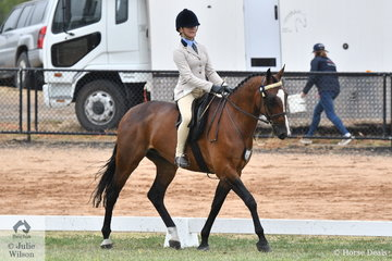 Darcy Park Show Standardbreds - Double Art (Darcy Park White Whisky) competed in the Alabar Hero Series Standardbred State Final.