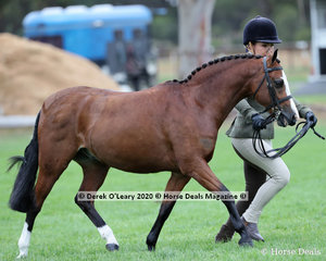 "Jenna Backman showed ""DP Popeye"" in the Led Small Hunter Pony"