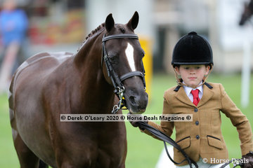 "Annique Smith showed ""Jestames Chaos"" in the Led Medium Hunter Pony placing 2nd in the class"