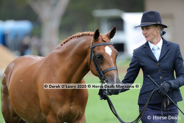 "Emma Nichol showed ""Monto Cristo V"" in the Led Large Hunter Pony"