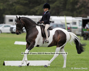 """""""Woodchase Charlie Brown"""" placed 2nd in the Ridden Small Show Hunter Galloway ridden by Sabrina Gilmour"""