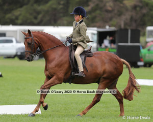 "Harrison Wessel rode ""Owendale Special Boy"" in the ridden Small Show Hunter Galloway"