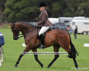 "Karen Fisher rode ""Cheraton Be Brave"" in the Ridden Large Hunter Galloway"