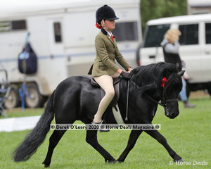 "Stella Horspole was the winner in the Ridden Shetland riding ""Colvadale Odin"""