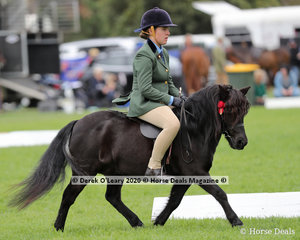 """Royal View Gambit"" ridden by Monique Callesa-Goodman in the Ridden Shetland, placed 3rd"
