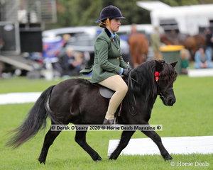 """Royal View Gambit"" ridden by Monique Callesa-Goodman in the Ridden Shetland, placed 3rd"